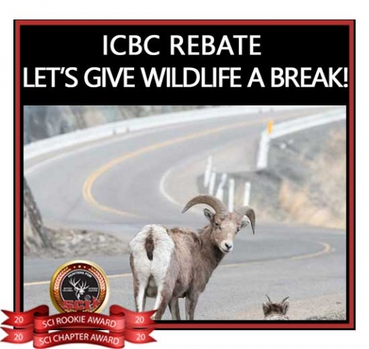 ICBC REBATE - LET'S GIVE WILDLIFE A BREAK